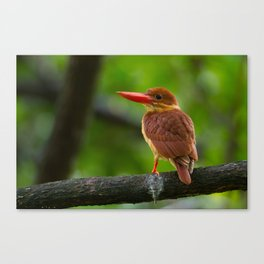 Ruddy Kingfisher Canvas Print