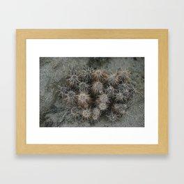 Monochrome Cactus in Joshua Tree National Park, California Framed Art Print