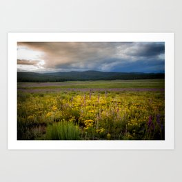 New Mexico Spring flowers Art Print