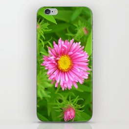little aster iPhone Skin