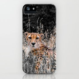 Cheetah Cheetah iPhone Case