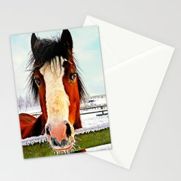 Snowy Whiskers Stationery Cards