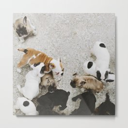 Oh puppy dogs Metal Print