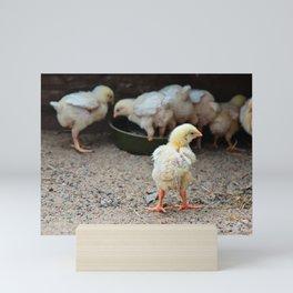 Cute small chick walking on the sand Mini Art Print
