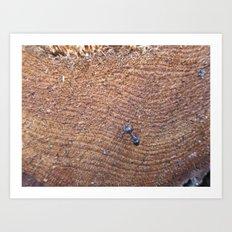 Ant on Wood Art Print