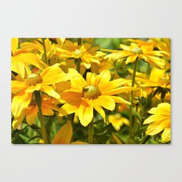 Yellow flowers 042 Canvas Print