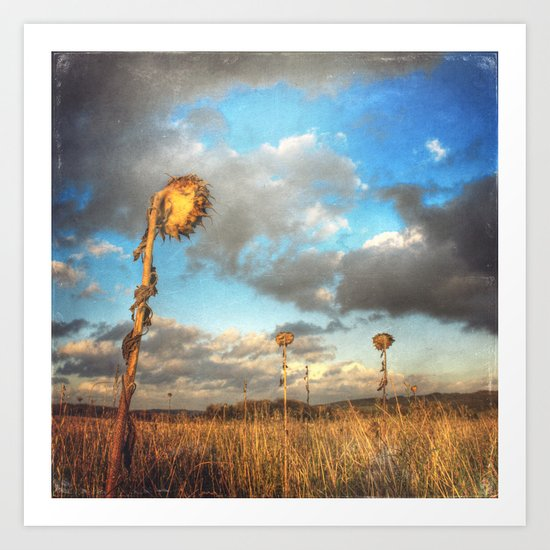 Field of lost Souls - Withered Sunflowers Art Print