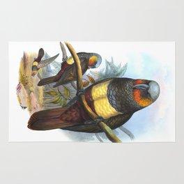Masséna Kaka Parrot, tropical bird in the nature of New Zealand Rug