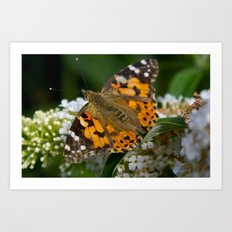 Time To Fly... Art Print