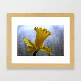 Daffodil on a Grey Day Framed Art Print