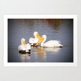 White Pelicans Circling Art Print