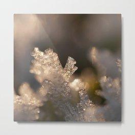 frozen moss Metal Print
