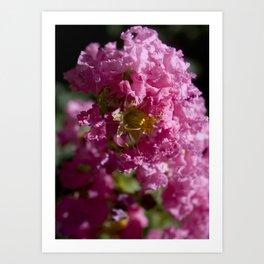 Purple flower cluster Art Print