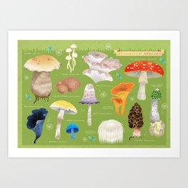 Mushroom Species Art Print