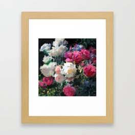 White & Pink Roses Framed Art Print
