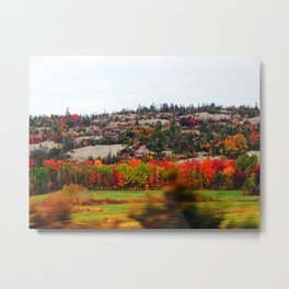 Trees and the Rock Metal Print