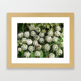 The Fly and The Bee Framed Art Print