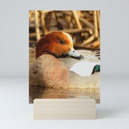 Eurasian Wigeon at the Pond Mini Art Print