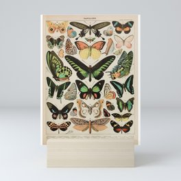 Papillon II Vintage French Butterfly Chart by Adolphe Millot Mini Art Print