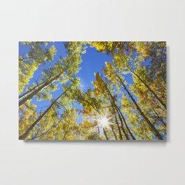 Fall Leaves in Colorado Metal Print