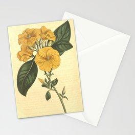 Flower 1100 linum trigynum Three styled Flax10 Stationery Cards