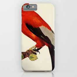 Vintage Print - Birds and Nature (1897) - Crow iPhone Case