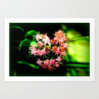 cacti Art Prints featuring Cacti by Chris' Landscape Images & Designs