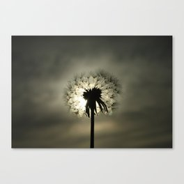 Dandy Lions Canvas Print