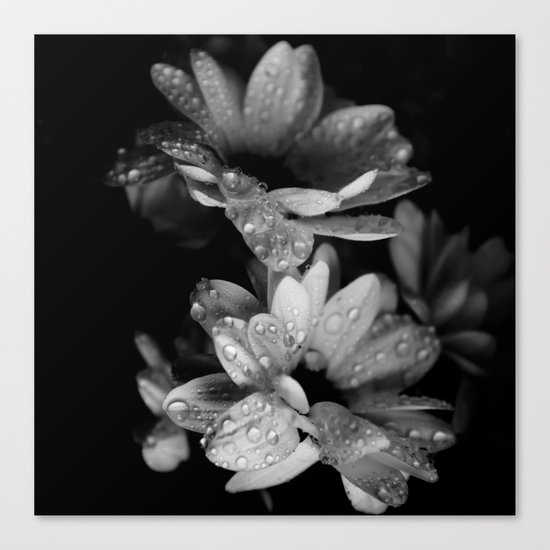 Flower and drops. Black and white. Canvas Print