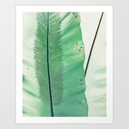 feather in a leaf Art Print