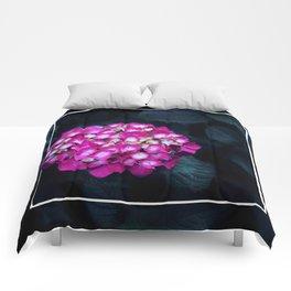 Boastful Vanity Comforters