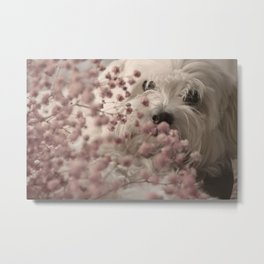 SWEET DOG Metal Print