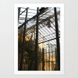 Golden Light in the Greenhouse Art Print