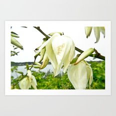 white-flowers Art Print