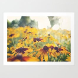 Black Eyed Susan's Art Print