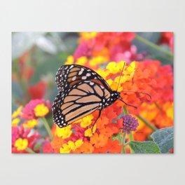 Monarch Feeding on Lantana Canvas Print
