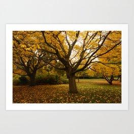 Autumn in Sheffield Art Print