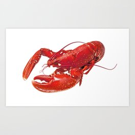 Lobster Body Malacostraca Retracted Claws Red Tone crustacean Art Print