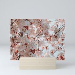cherry blossom ii Mini Art Print
