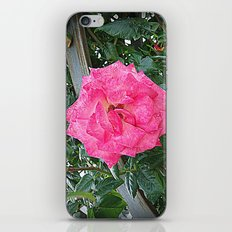 rosa rosa iPhone & iPod Skin