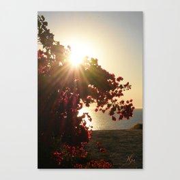 Bougainvillea Sunset Canvas Print