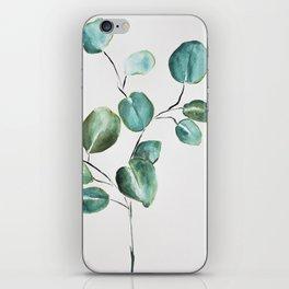 Eucalyptus leaves, illustration, botanical iPhone Skin