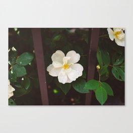 Manhattan Bloom Canvas Print