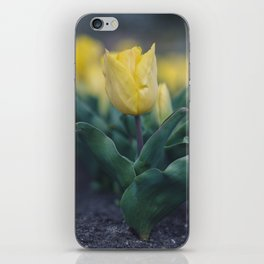 Yellow Tulips iPhone Skin