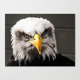 Mean Bald Eagle Canvas Print