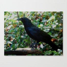 Not your average bird feeder Canvas Print
