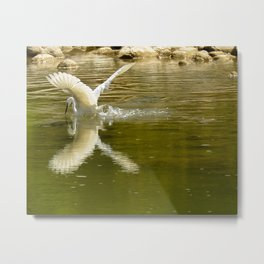 The heron lays on the placid river... Metal Print