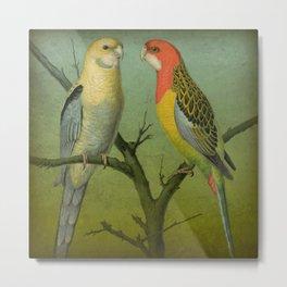 2 Parrots Metal Print