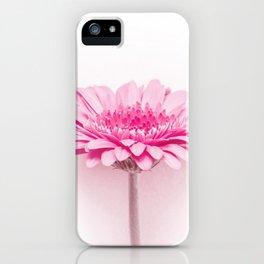 Pink gerbera iPhone Case