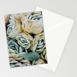 California Potted Succulents Stationery Cards